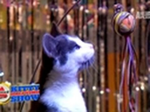 Puppy Bowl VII- 2011 Kitty Halftime Show