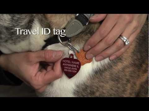 Traveling with your Pet: Part 1