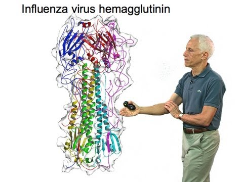 Stephen Harrison (Harvard) Part 2: Viral membrane fusion