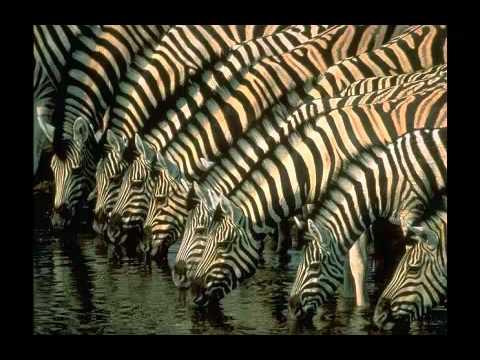 Name The Animal - Zebra Slideshow