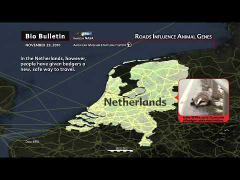 Science Bulletins: Roads Influence Animal Genes