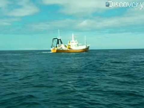 Treasure Quest: Shipwreck Explorer
