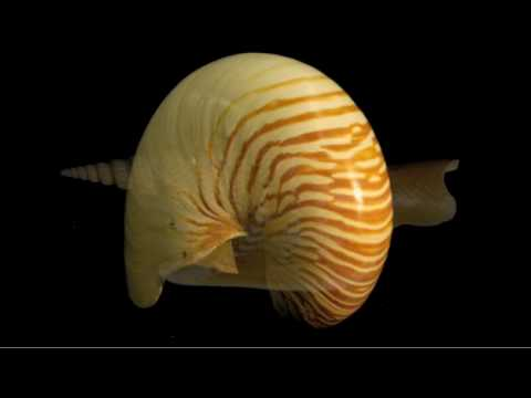 The Magnificent Shells of the Smithsonian