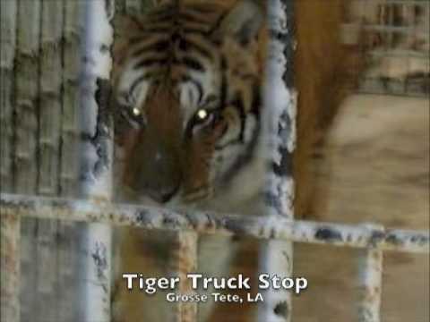 Truck Stop Tiger Tony