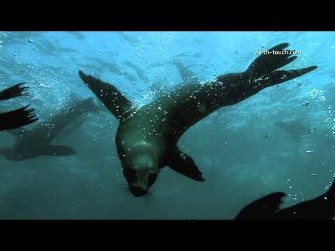 Seals swimming in super slo-mo: Wild Warp episode 2