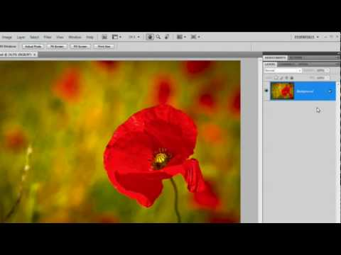 Shadows & Borders in Photoshop - Quick Shots 03