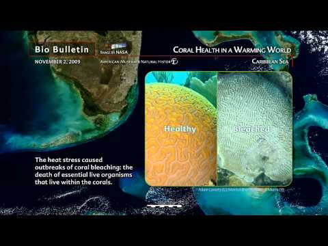 Science Bulletins: Coral Health in a Warming World