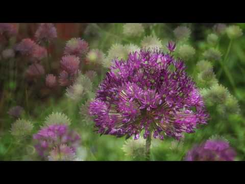 NYBG Color Report with Jon Peter — Late Spring 2009