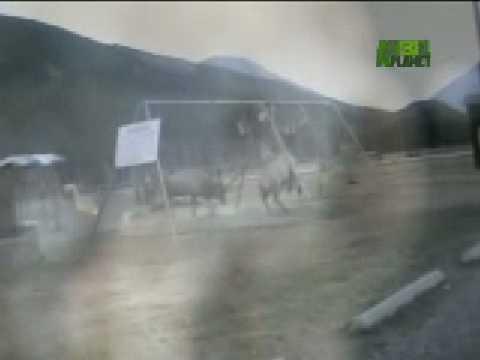 Untamed and Uncut - Elk Battle on Playground