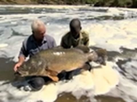 River Monsters- Landing a Nile Perch