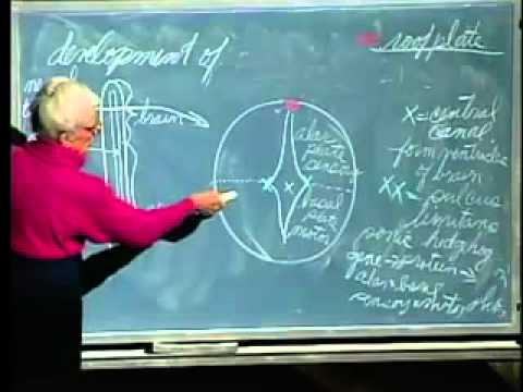 Saylor BIO302: Development of Nervous System Lecture 24