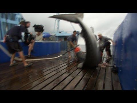 Shark Men - A Fighting Tiger