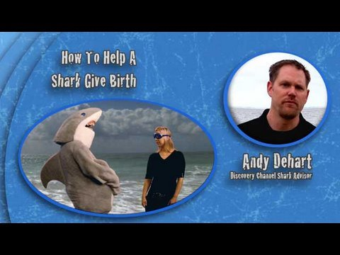 Shark Week 101: How to Help a Shark Give Birth