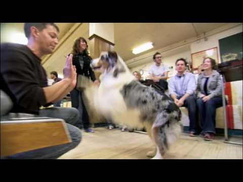 SUPERFETCH: Dog Goes Bowling