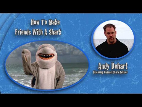 Shark Week 101: How to Make Friends with a Shark