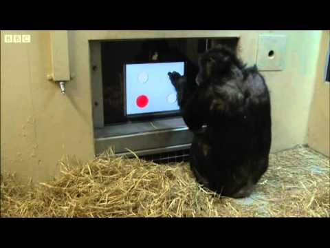 Touch Screen Test  - Chimp TV - BBC