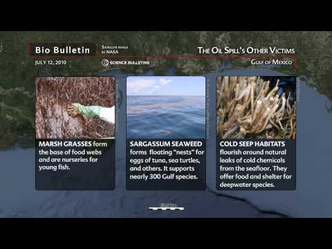 Science Bulletins: The Oil Spill's Other Victims