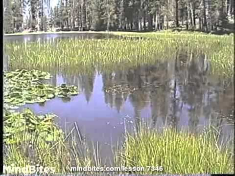 Physical Geography: Wetlands, Marshes, Swamps