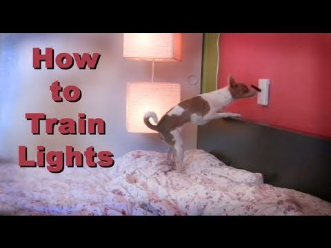 Teaching lights  -dog tricks clicker training