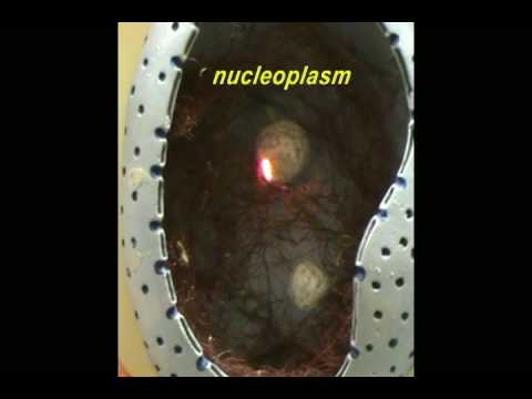 New Cell Model - Cell Membrane & Nucleus.avi