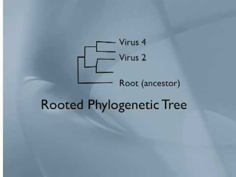 Phylogenetic Trees Viruses