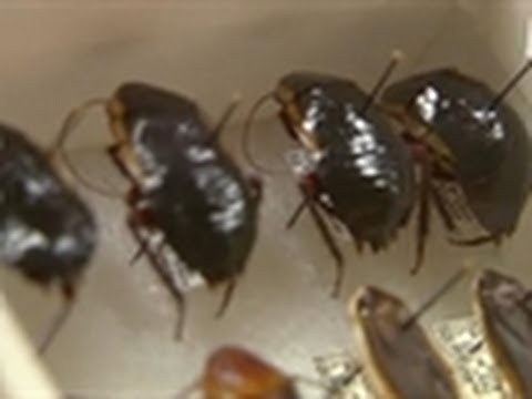 Scared of Dead Roaches | My Extreme Animal Phobia