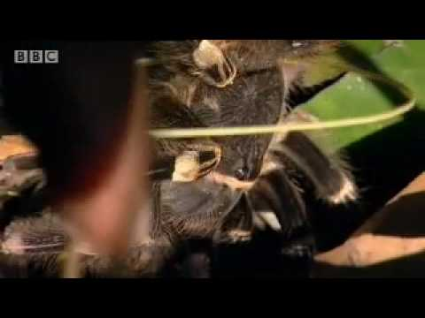 Poisonous tropical rainforest animals in the Amazon - BBC wildlife