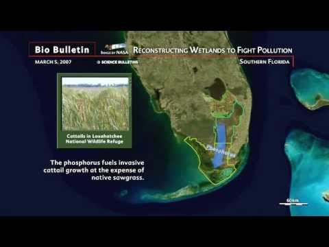 Science Bulletins: Reconstructing Wetlands to Fight Pollution