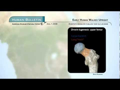 Science Bulletins: Early Human Walked Upright