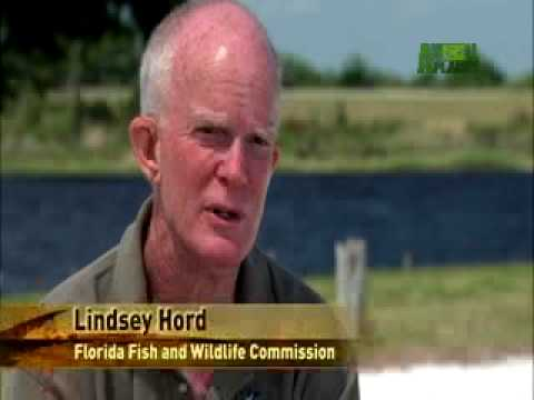 When Animals Strike - Gator Strike Call for Help