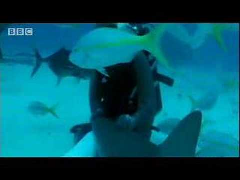 Woman kisses sharks in the wild - BBC wildlife