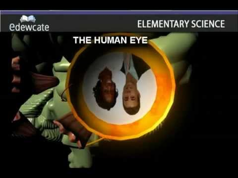 THE HUMAN EYE - Anatomy
