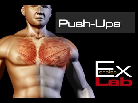 Push-Ups : Chest Exercises