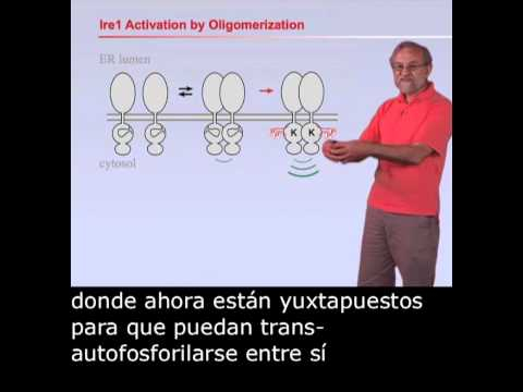 Peter Walter (UCSF/HHMI): Unfolding the UPR with Spanish Subtitles
