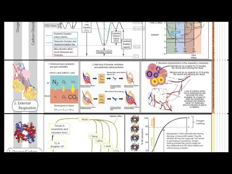 Respiratory Physiology Part 2