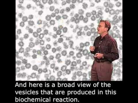Randy Schekman Part 2: Biochemical Reconstitution of Transport Vesicle Budding English Subtitles