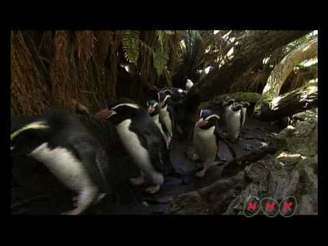 New Zealand Sub-Antarctic Islands (UNESCO/NHK)