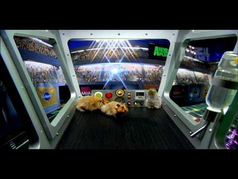 Puppy Bowl VI- Pregame Show