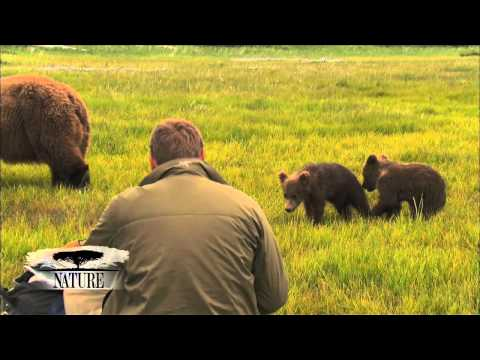 NATURE | Bears of the Last Frontier | Close Encounters | PBS