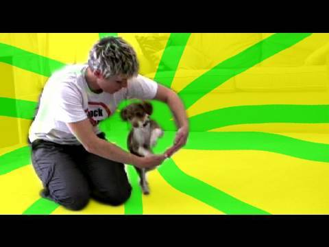 Tug play training- dog training clicker training tricks
