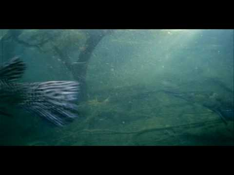 River Monsters - Swimming with Alligator Gar