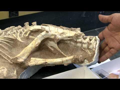 Preparing Dinosaur Fossils Inside AMNH