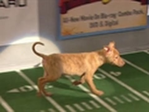The Starting Lineup | Puppy Bowl VIII