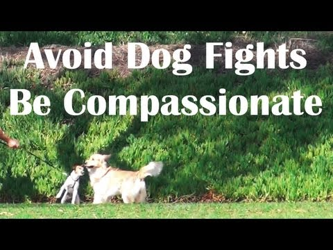 Off leash dog compassion- dog training