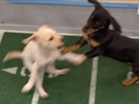 The Ref's Favorite Puppies | Puppy Bowl VIII