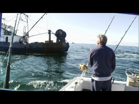 Wicked Tuna - Sustainability: Bluefin Bait