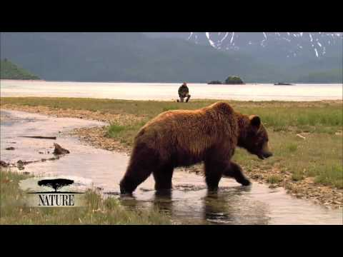 NATURE | Bears of the Last Frontier | The Manhattan of Bear Country | PBS