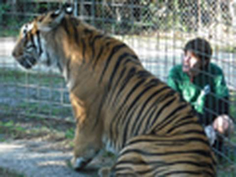 Vote to SAVE TIGERS! $1,000,000 PRIZE!