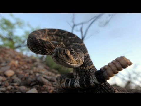 National Geographic Live! - Joel Sartore: The Snake Show