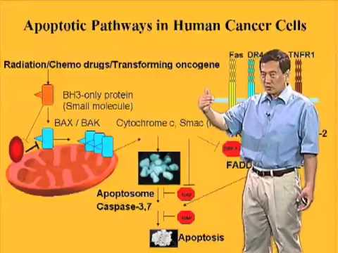Xiaodong Wang (U Texas Southwestern) Part 3: Extrinsic Pathway of Apoptosis
